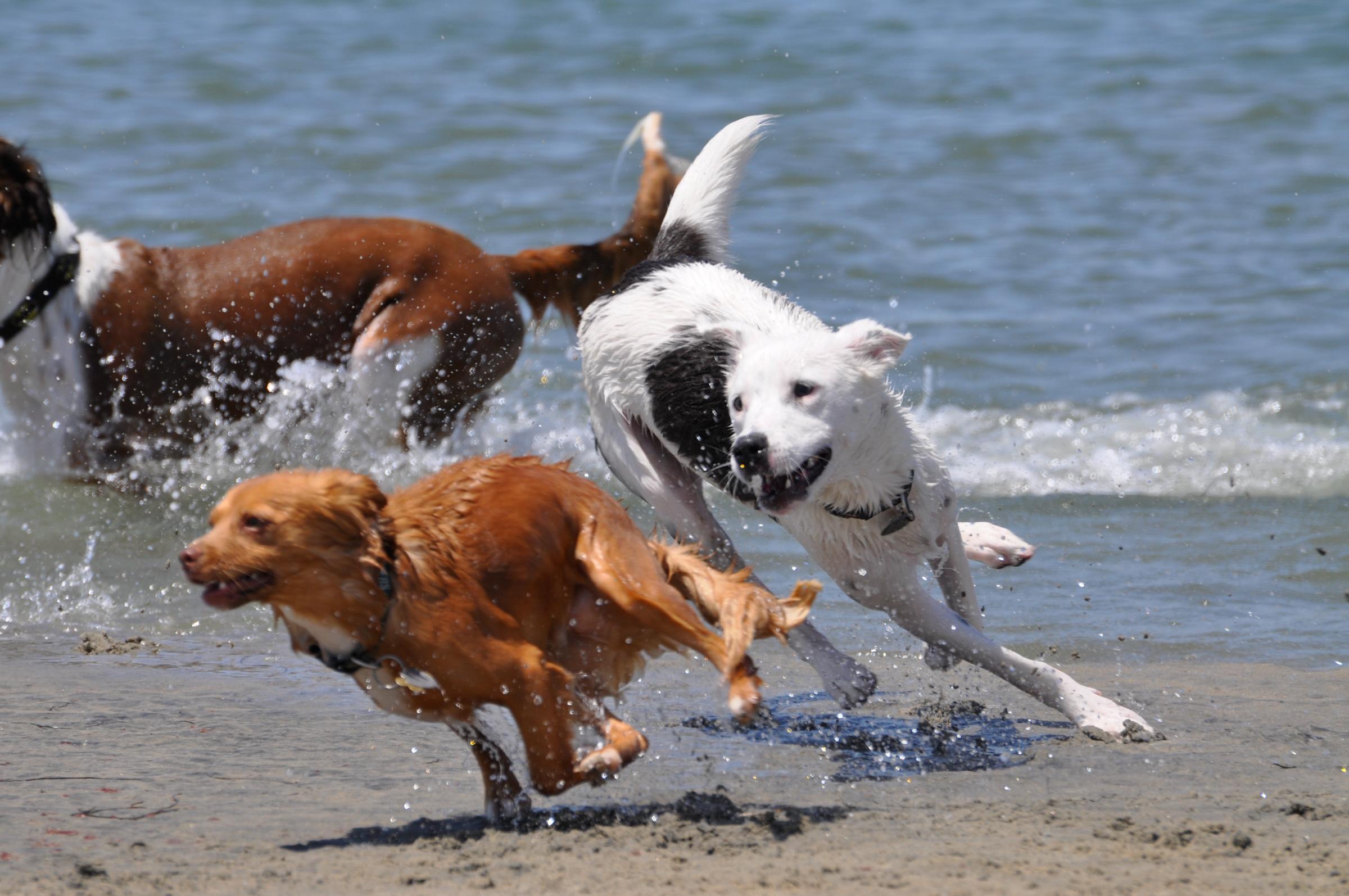 OB Dog Beach