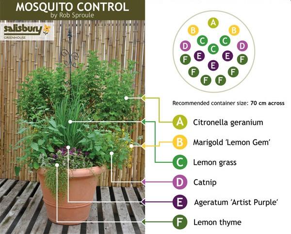 Outdoor_Mosquito