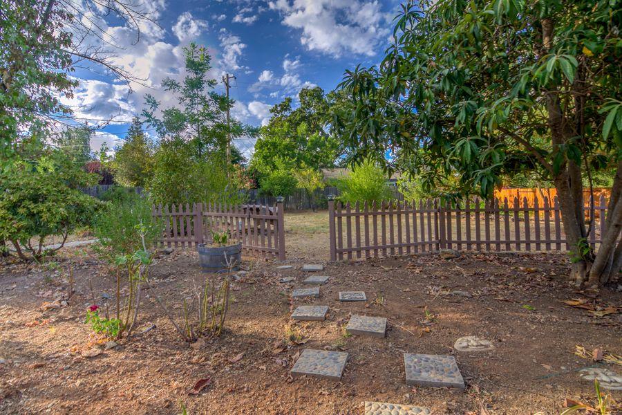 Backyard-2571